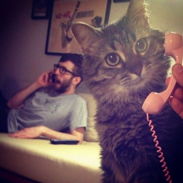 Cat on a phone, calling Extenda